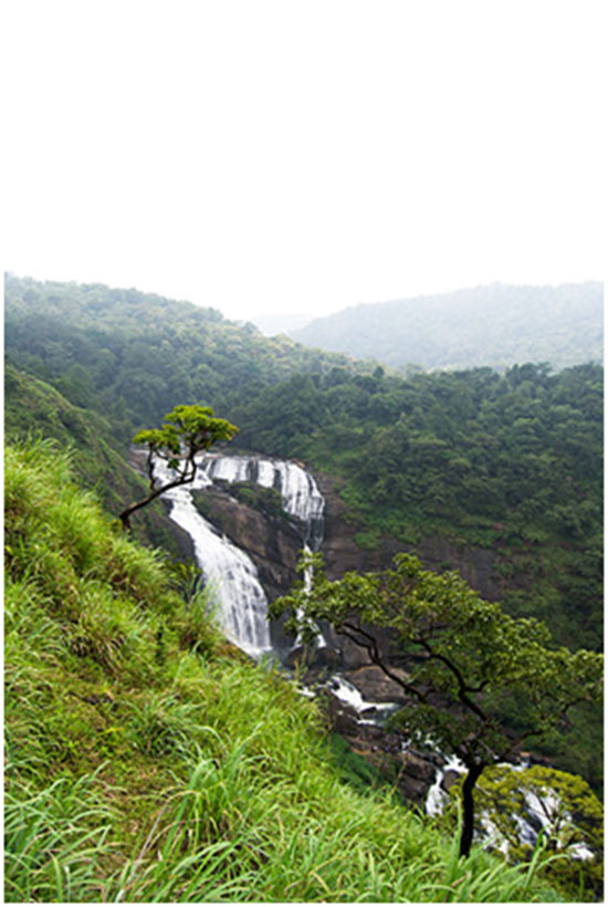 Mallali falls This waterfall is formed by the Kumaradhara River flowing down the Pushpagiri hills.One can reach this place from Somwarpet through jeep or trek through the forest. It is best to visit this place in the months July through to December as the water is in its full force and quite marvellous to behold. The trek to the falls is quite easy, andsmall, mesmerising streams of water on the way will carry you through to the actual falls that are a sight for sore eyes.  Chelavara falls